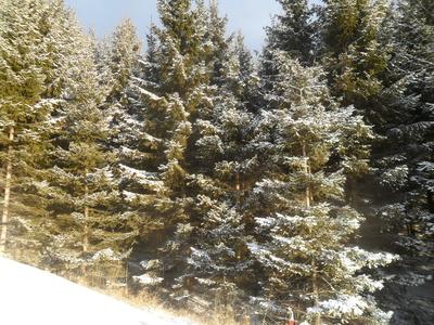 Erster Schnee im Wald