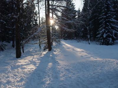 Winter im Segeberger Forst