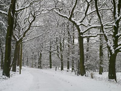 Waldweg nach Schneefall
