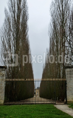 Allee bei Versailles