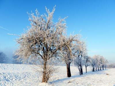 Obstbäume hinter dem Deich