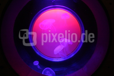 Qualle in Pink