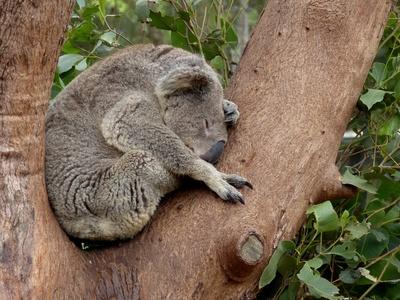 Tiere Australiens 1
