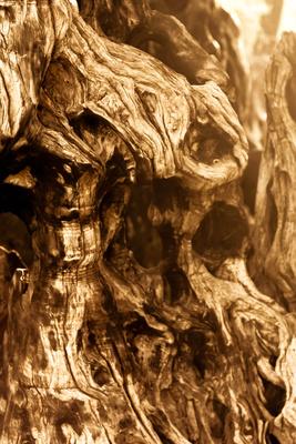 Bizarre Holzstruktur