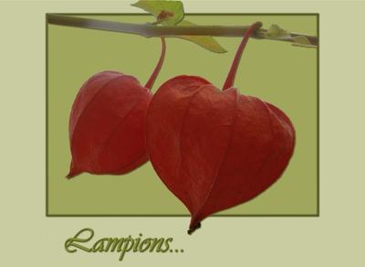 Lampions...