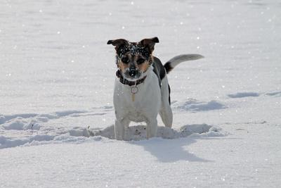 Spielfreude im Schnee