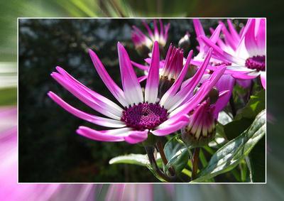 Blume-0147