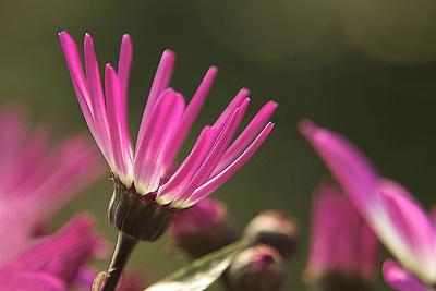 Blume-0149
