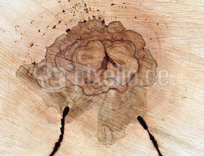 Holzanschnitt