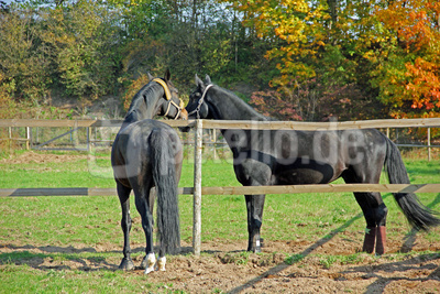 Pferde 10
