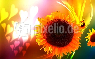 Herzliche Sommerblume