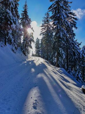 Der Wintersonne entgegen
