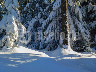 Sonne im verschneiten Schwarzwald