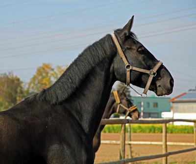 Pferde 11