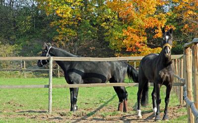 Pferde 12