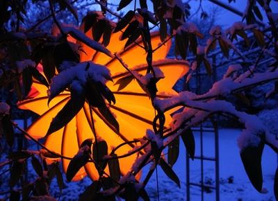 Baum mit gelben beleuchtetet Lampion im Winter