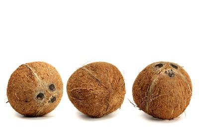 Kokosnuss 5