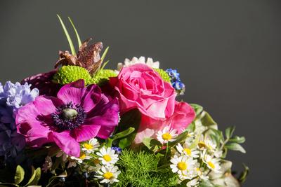 Blumen des Frühlings