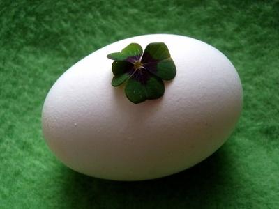Ist Eierkauf Glückssache?