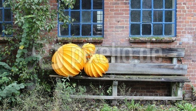 Gelbe Lampions auf einer Bank im Garten
