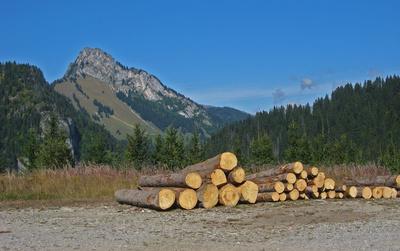 Forstarbeit: Fürs Sägewerk