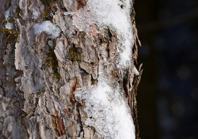 Baumstamm im Winter