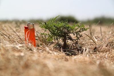 Ein Gräslein wie ein Baum_2