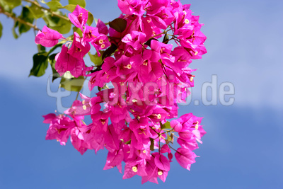 Sunny Day in Pink and Blue
