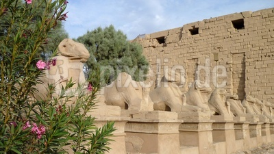 Widderköpfige Sphinxe