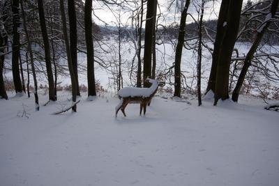 Neulich im Schneewald