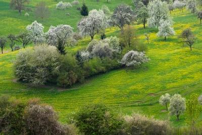 Streuobstwiesen im Frühjahr