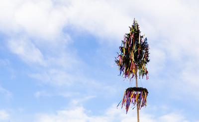 Der Maibaum steht - die Bänder flattern_2