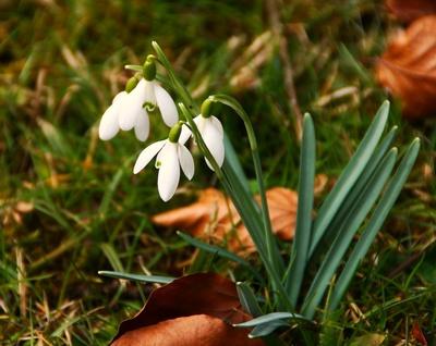 Der März im Frühlingskleid 08