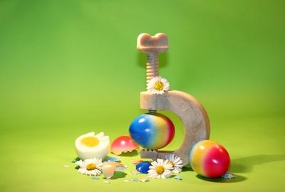 ein eierschalen.....knacker...