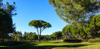 Golfen in Belek (Pasha-Course), Grün 4