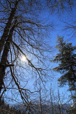 Werdenfelser Wintertraum 11