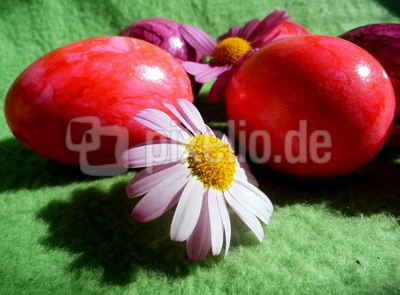 Eier in rosa