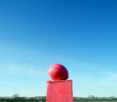Das pinkfarbene Osterei