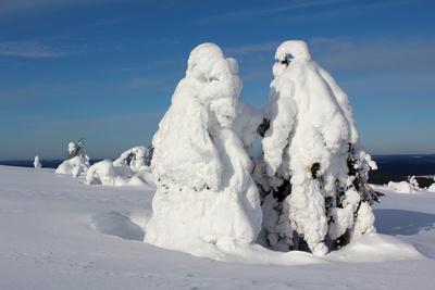 Schneelandschaft Finnisch Lappland