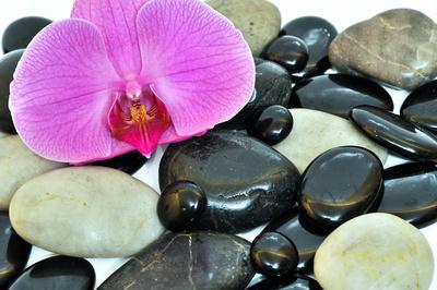 Orchidee Stein Stil