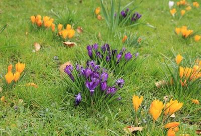 Frühling im Breisgau 03