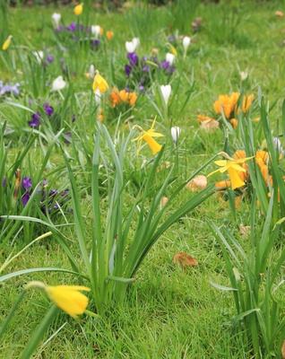 Frühling im Breisgau 05