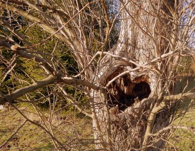 Ein Liebes-Baum