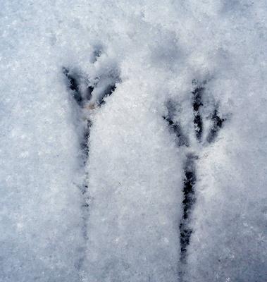 Winzige Vogelspuren im Schnee