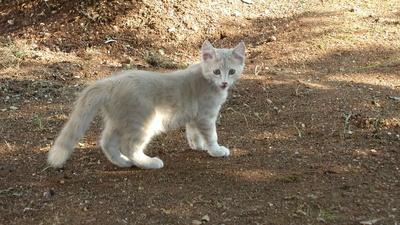 Funtana-Kätzchen
