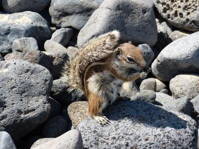Streifenhörnchen am Strand