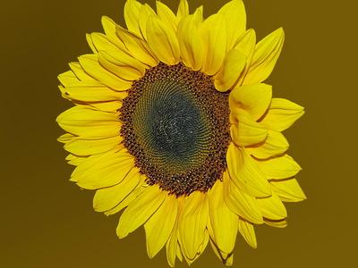 sonnige Blüte