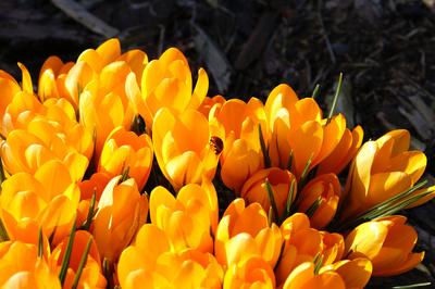 Frühling in orange