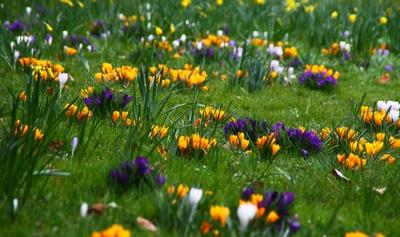Freiburgs Frühlingsfarben 01