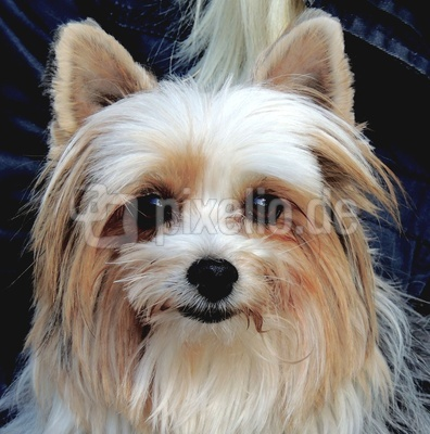 Hundefräulein